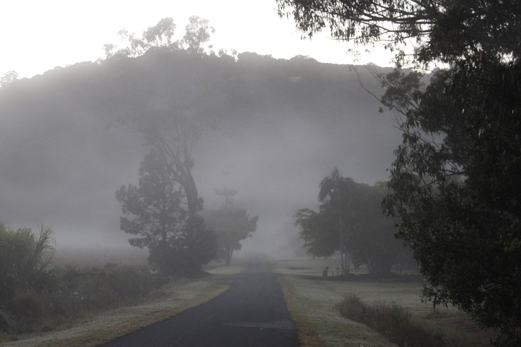 foggy road in the early morning, with a few trees